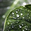 91 Best Nature Full HD Wallpapers for PlayBook-playbook-nature-full-hd-3-jpg